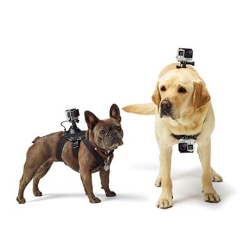 SmarTone Online Store GoPro Fetch™ Dog Harness